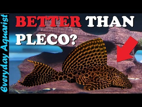 6 AWESOME Aquarium ALGAE EATERS That Aren't Pleco Fish