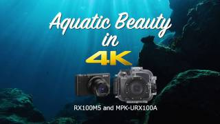 Ocean Beauty in 4K - RX100M5