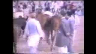Horse Show, 1981