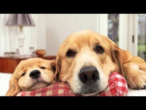 Mother Dog Protects Puppies Compilation