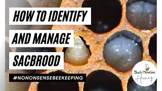 How to Identify and Manage Sacbrood