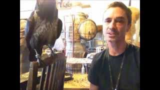 Raven Or Crow As A Pet..............................peter Caine, Brooklyn Dog Training