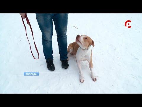 В Вологде домашняя собака напала на ребенка