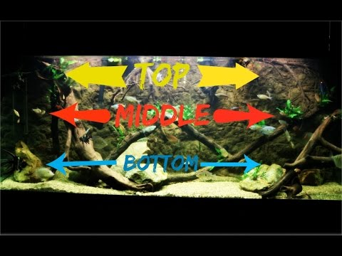 Top, Middle & Bottom Swimming Aquarium Fish