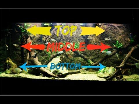 Top, Middle & Bottom Swimming Aquarium Fish