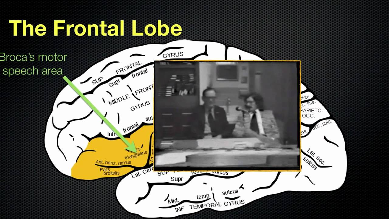 065 The Anatomy and Functions of the Frontal Lobe - YouTube