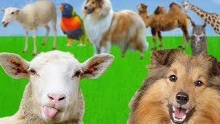 Help the SHEEP and the DOG to find mothers.Animals Find Mom. Learn Animals Names and Sounds for Kids