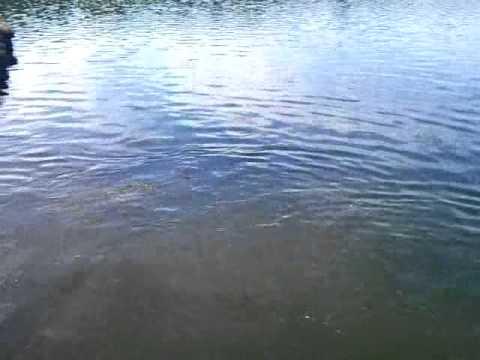 כריש מסתורי באגם
