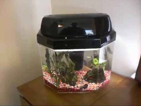 African Dwarf Frog Tank