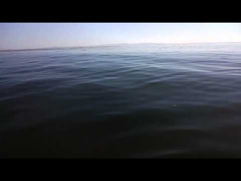 Mike Elgan takes video of Santa Barbara Dog Mermaids with Google Glass.