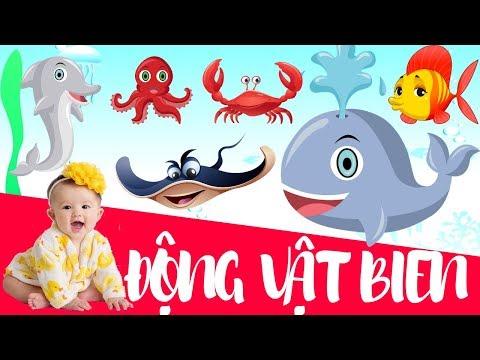 Dạy bé học động vật biển   Bé tập nói tên các con vật