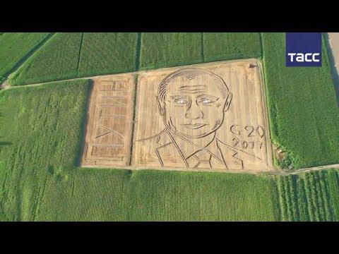 Путин на поле конопли что можно сделать из слабой конопли