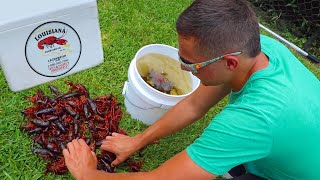 Stocking My Ponds With Live CRAWFISH!! 🦞
