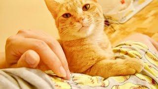 何をされても絶対どかない猫がかわいすぎる