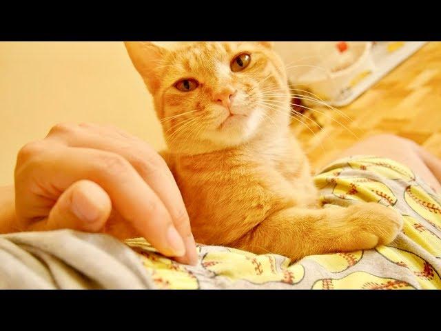 膝の上からどいてくれない猫のコショウくん