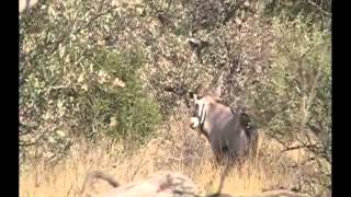 How to prepare for an African Safari Hunt- 2013 B.Swift