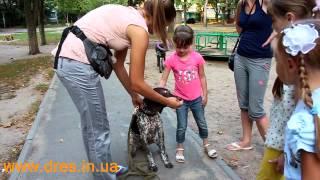 Собака укусила ребенка! Что делать?