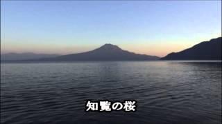 日野美歌 - 知覧の桜
