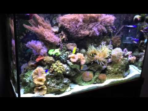 110 Gallon Reef Tank - Tall Cycling and Aquascaping | Doovi