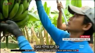 חדשות השבת - מכופף הבננות | כאן 11 לשעבר רשות השידור