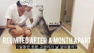 Reuniting With Our Cat 🐈 (자막)1달동안 못본 고양이가 날 알아볼까?