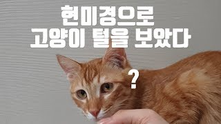 스마트폰 현미경으로 고양이털을 보았다.