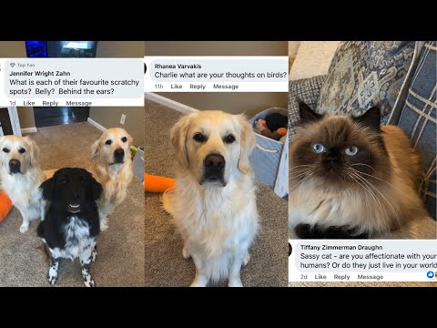 Animals Answer Fans Questions