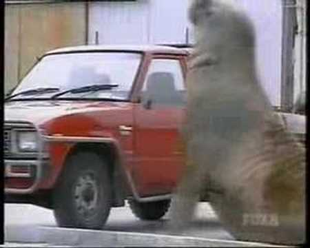Walrus/Elephant Seal Smashes Into Cars