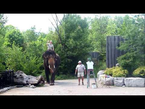African Lion Safari 2017- Hamilton | Ontario | Canada