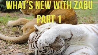 White Tiger Claw Trim