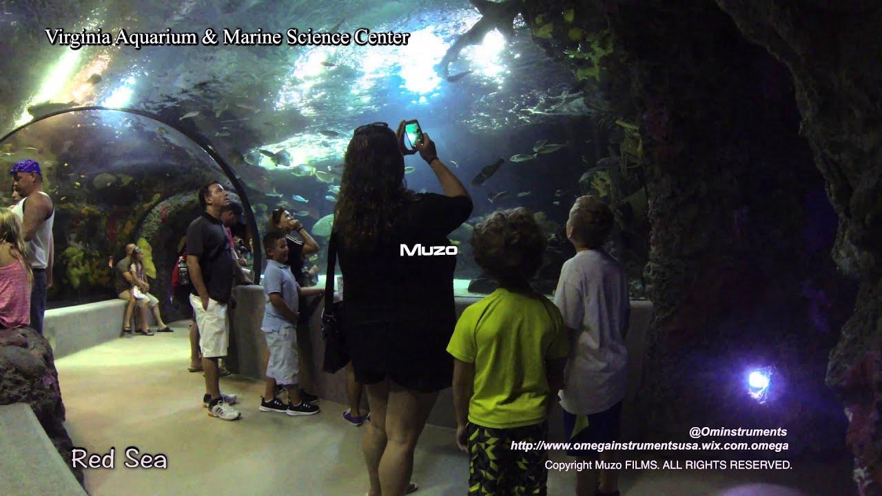 Muzo Virginia Beach Aquarium