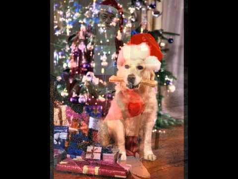 Diaporama-Drôle de Noël...( Alan Jackson - Rudolph The Red Nosed Reindeer