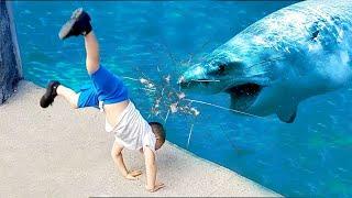 Я Ржал До Слез Приколы Смешные Видео Веселые дети в аквариуме акуленок ду ду ду