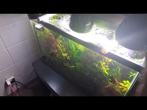 Duckweed for Sale! (May 7 2017-May 21 2017)