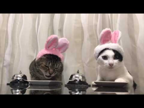 Cats in bunny hats ring bells
