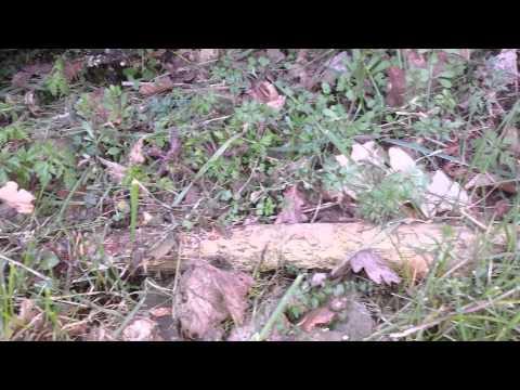 Ludlow Bone Bed: Silurian-Devonian Boundary