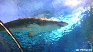 [HD] Up-close Shark Encounter - Shark Tunnel - SeaWorld Parks - San Diego, Orlando