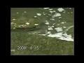 熱海網代温泉 水神川 天然ウナギの餌付け1 の動画、YouTube動画。