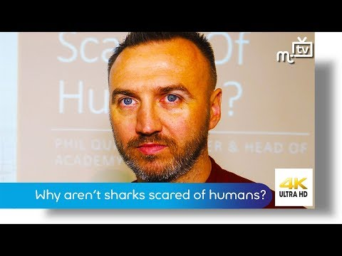 why-aren't-sharks-scared-of-humans?