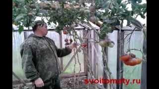 Американские сорта томатов (помидор) в сентябре(, 2012-09-10T08:16:11.000Z)