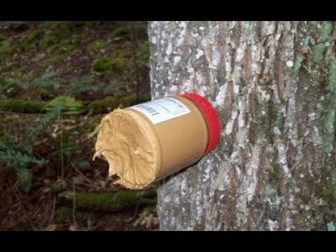 Peanut Butter Deer Attractant Youtube