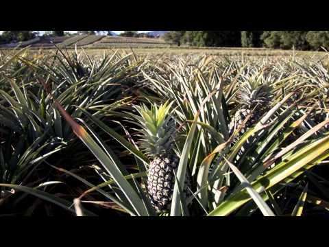 Sunshine Coast -- The Natural Advantage: Regional Economic Development Strategy 2013-2033