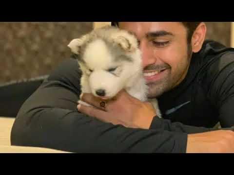 Pearl V Puri's New Dog |newton |baby Boy