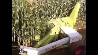 ensileuse claas jaguar 61 trainee par tracteur case ih 1056 xl ensilage 4 octobre 2015