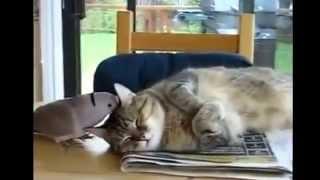 Птица мешает коту отдыхать