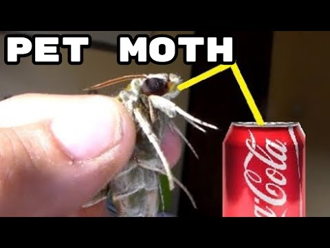 HOW TO FEED; A moth!  (Yes really!)
