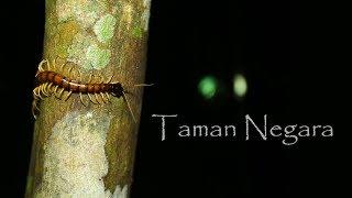 Taman Negara Pahang - Chief Travel Officer 2018 Episode 1