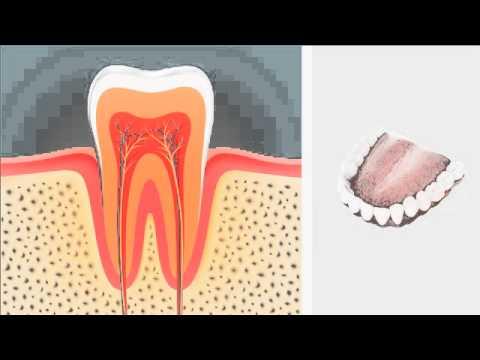Shellharbour City Dental - (Emergency dental treatment), Dentist, Shellharbour City Centre, NSW