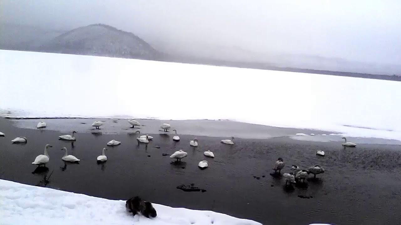 ライブ カメラ 湖 摩周