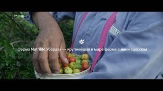 БАД Nutrilite Витамин С плюс от Amway с экстрактом вишни ацеролы